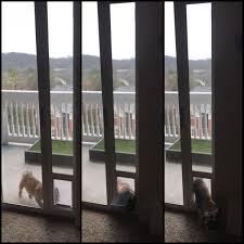 Doggie Door Insert For Patio Door by Find More Doggy Door Insert For Sliding Door For Sale At Up To 90