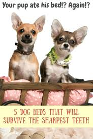Chew Proof Dog Beds by 100 Chew Proof Dog Beds 2017 January Dog Beds U2013 Gallery