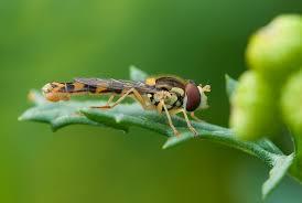petites betes dans la maison les insectes dans nos maisons