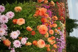 when to plant flower bulbs garden bulb flower bulbs