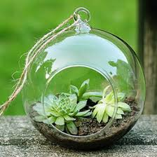 discount bulb planting 2018 bulb planting on sale at dhgate