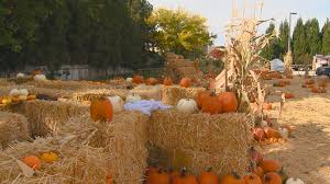 Pumpkin Patch Maryland by Boise Fire Hosts 10th Annual Pumpkin Patch Saturday Usa Local