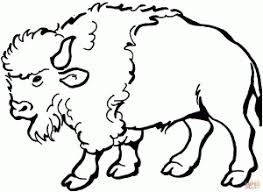 Buffalo For Free Coloring Page