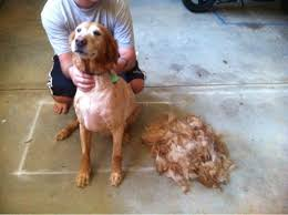 Petco Dog Shedding Blade by Trim Your Dog Yourself They Said It Will Be Easy They Said Funny