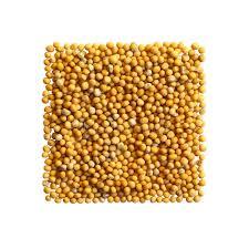 moutarde blanche en cuisine graines de moutarde blanche en composition carrée photo stock