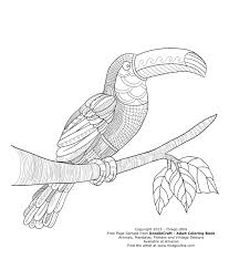 Toucan Coloring Book Vector Illustration Royalty Free Cliparts