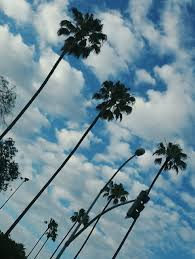Palm Trees Palms California Cali Life Teens Tumblr Wallpaper Wallpapers For Desktop Iphone Backgrounds Cute Cool Sky Pics Photography
