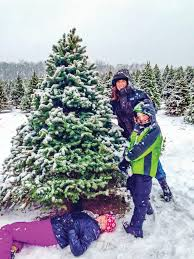 Sugar Or Aspirin For Christmas Tree getting the most out of your christmas tree newton daily news