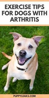 Bolster Dog Bed by 89 Best Bolster Dog Beds For Large Dogs Images On Pinterest
