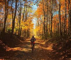 Pumpkin Vine Trail Ride by 5 Places To See Fall Foliage In Indiana U0027s Cool North Nitdc