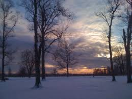 Stew Leonards Christmas Tree Hours by Mary Kunz Goldman Blogs Daily While Writing Leonard Pennario U0027s