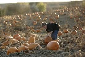 Skinny Bones Pumpkin Patch Food by Fall