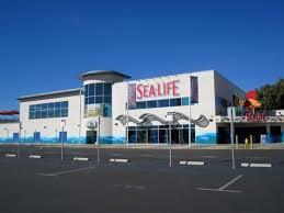 sea aquarium in carlsbad ca parent reviews photos trekaroo