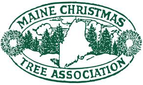 Christmas Tree Shop Bangor Maine by G U0026 S Tree Farms Maine Christmas Tree Association