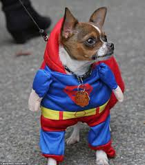 West Chester Pa Halloween Parade 2015 by Hundreds Of Dogs Dress Up For 25th Halloween Parade In New York