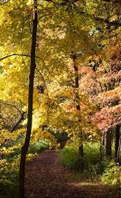 Puyallup Glass Pumpkin Patch by 76 Best The Morton Arboretum Images On Pinterest Illinois