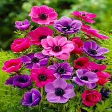 summertime bulb garden 100 flower bulbs buy order now