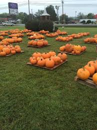 Bishops Pumpkin Patch by Pumpkins Are Here Welcome To The Ridge