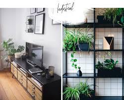 pflanzen für jeden einrichtungsstil wohnklamotte