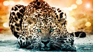 Jaguar Full Documentary The Year of The Cat History Channel HD