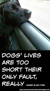 Do Pocket Puggles Shed by Best 25 Cute Dog Quotes Ideas On Pinterest Sweet Dog Quotes