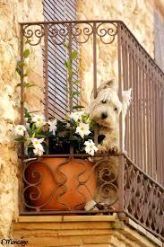 Old Westbury Gardens Dog Halloween by 136 Best Westie Just Like Our Kensie Images On Pinterest