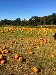 Pumpkin Picking Nj by Hello Fall U2014 Back To Basil
