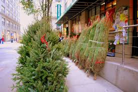 Balsam Hill Christmas Tree Sale by Decorating Awesome Balsam Hill Trees With Beige Curtain