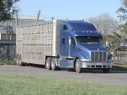 Livestock Truckers Seek Flexibility In Electronic Log Device Rules ... Trucking The Worlds Best Photos Of 389 And Livestock Flickr Hive Mind About Metzger Agricultural Exemptions Instated For Regulations Pork Firms Worried Electronic Logging Device Could Hurt Henderson Jobs Otr Long Haul Truck Drivers West Land Cattle Hauler Jessica Lorees 2003 Pete 379 Livestockcattle Haulers Sale Llc Kenworth T800 With 4 Axle Tra Truck Spill Cleaned Up A Lot Help Krvn Radio Australian Livestock Rural Transporters Association