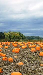 Portland Pumpkin Patches Oregon by This Epic Pumpkin Patch Road Trip In The Pacific Northwest Is A