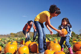 Pumpkin Patches In Arkansas by Living In Arkansas