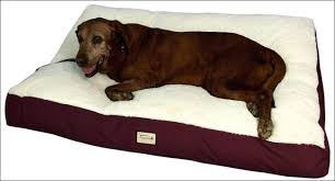 Chew Resistant Dog Bed by Living Room Wonderful Dog Toys That Are Indestructible Tough Dog