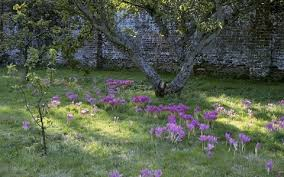 bulbs that flower in autumn yes and you plant them in july the