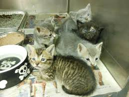 cats on deck kittens on deck going to bat for chicago s tiniest cats