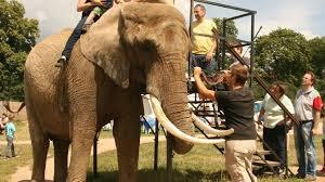 wohnzimmer für elefanten mmh