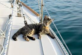 cats on deck quits and sells everything to travel the world with