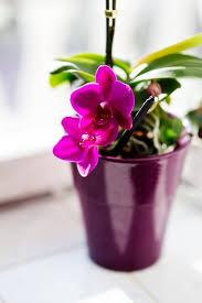 pflanzen fürs schlafzimmer darauf sollten sie achten focus de