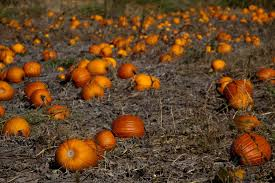 Varieties Of Pumpkins by Mn Pumpkin Patches Great You Pick Pumpkin Patches