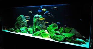 How To Set Up An African Cichlid Tank - Step By Step Guide - YouTube How To Set Up An African Cichlid Tank Step By Guide Youtube Aquascaping The Art Of The Planted Aquarium 2013 Nano Pt1 Best 25 Ideas On Pinterest Httpwwwrebellcomimagesaquascaping 430 Best Freshwater Aqua Scape Images Aquascape Equipment Setup Ideas Cool Up 17 About Fish Process 4ft Cave Ridgeline Aquascape A Planted Tank Hidden Forest New Directly After Setting When Dreams Come True