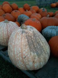 Pumpkin Patch Kiln Mississippi by Tours Ghost Walks U0026 More Deep South Magazine