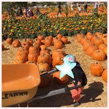 Uesugi Farms Pumpkin Patch by Pumpkin Patch Uesugi Farm 新米ママmidoriのカリフォルニア子育て