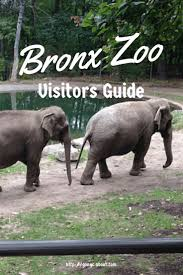 Bronx Zoo Halloween 2014 by 183 Best Animal Zoo Images On Pinterest Animals The Zoo And Zoos