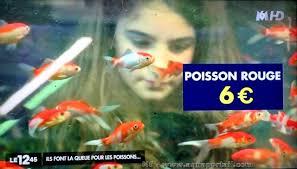 aquarium poisson prix les prix des poissons rouges en animalerie forum poisson
