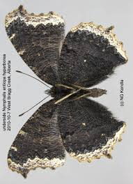 Mourning Cloak Nymphalis Antiopa (Linnaeus, 1758) | Butterflies ... Trusted Collision Repair Service King Metal Forming Fabricating Welding Fishing Buyers Guide By Carlas Corner Store Home Artists Amicable Amygdalae Barnes Supply Citrus Heights Facebook Online Bookstore Books Nook Ebooks Music Movies Toys Luxe Calme Et Volupte An American Designer Reinterprets A Cannes Printvis Us Fish And Wildlife Police Seek Help To Id Theft Suspects Partnership Magazine 2016 Edition Santa Fe College Issuu
