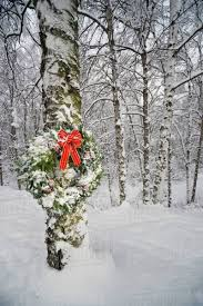 Christmas Wreath Hanging On A Birch Tree In Forest Anchorage Alaska