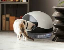 water for cats catspad smart food and water dispenser for cats gadget flow