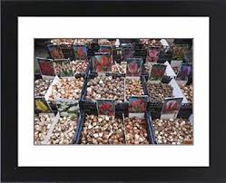 cheap flower bulbs sale find flower bulbs sale deals on line at