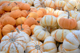 Types Of Pumpkins And Squash by Pumpkins Gourds Are Festive Decorations Mississippi State