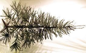 4ft Christmas Tree Sale by Christmas Tree