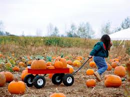 Northwest Ohio Pumpkin Patches by Fall Family Staycations Travelchannel Com Travel Channel